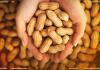 amendoim emagrece