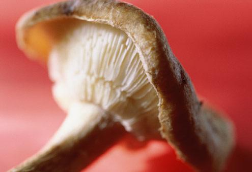 Dieta-do-Cogumelo-Para-Emagrecer-01