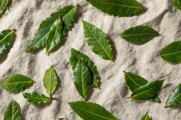 Como secar folha de louro